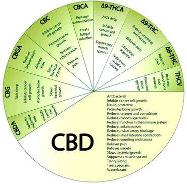 CBD circle graph - CBD Explained